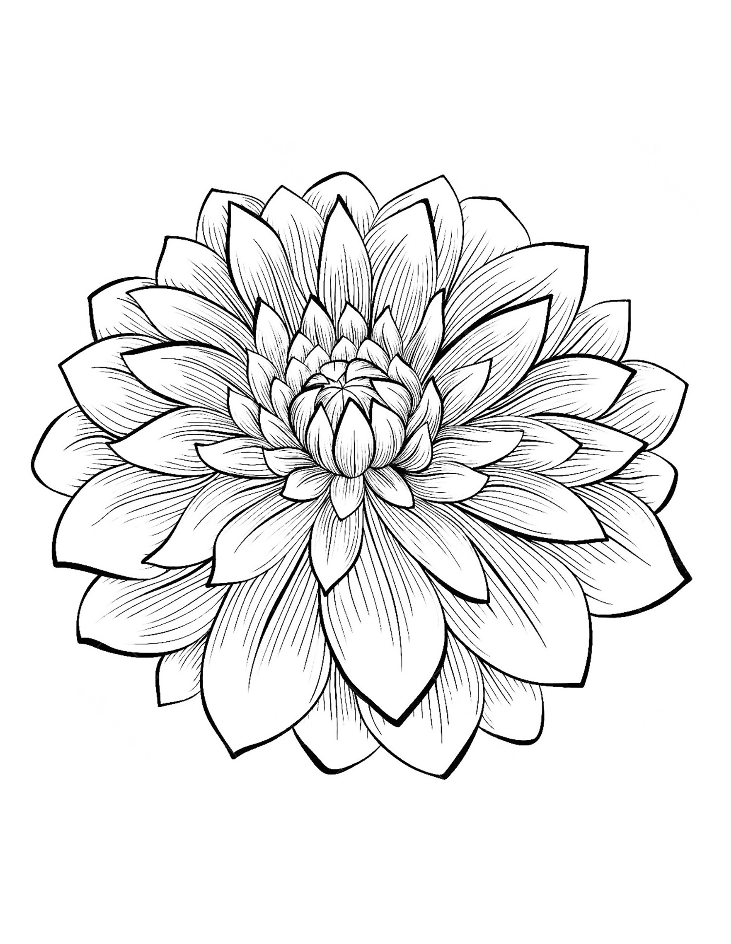 Dahlia coloring #4, Download drawings