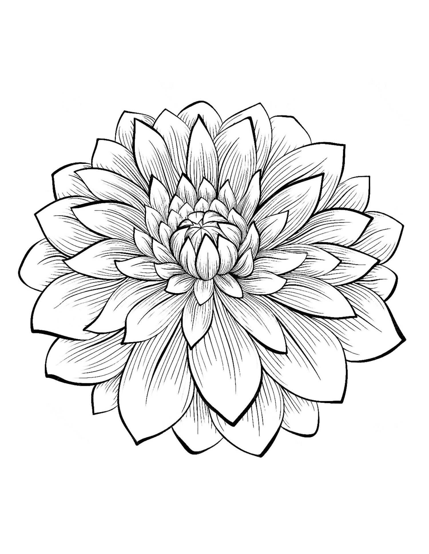 Dahlia coloring #17, Download drawings