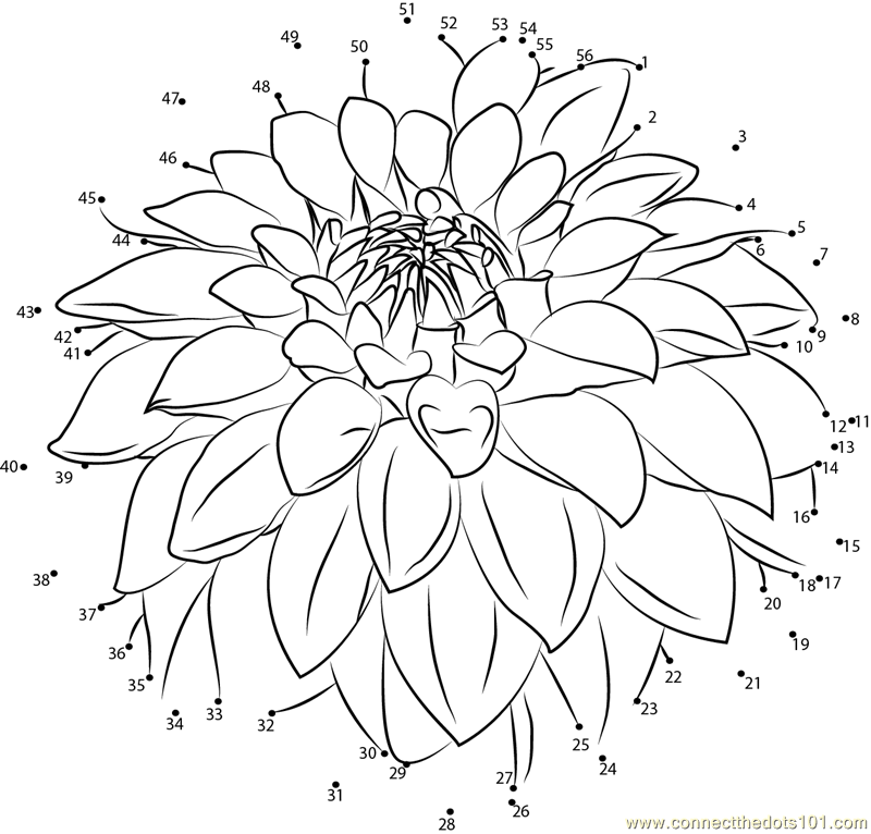 Dahlia coloring #6, Download drawings