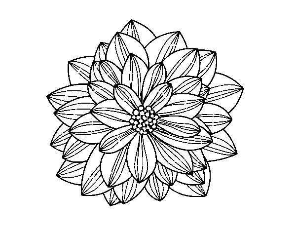 Dahlia coloring #3, Download drawings