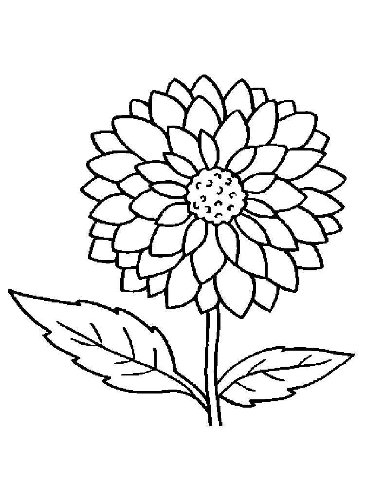 Dahlia coloring #9, Download drawings