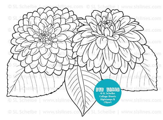 Dahlia coloring #3, Download drawings