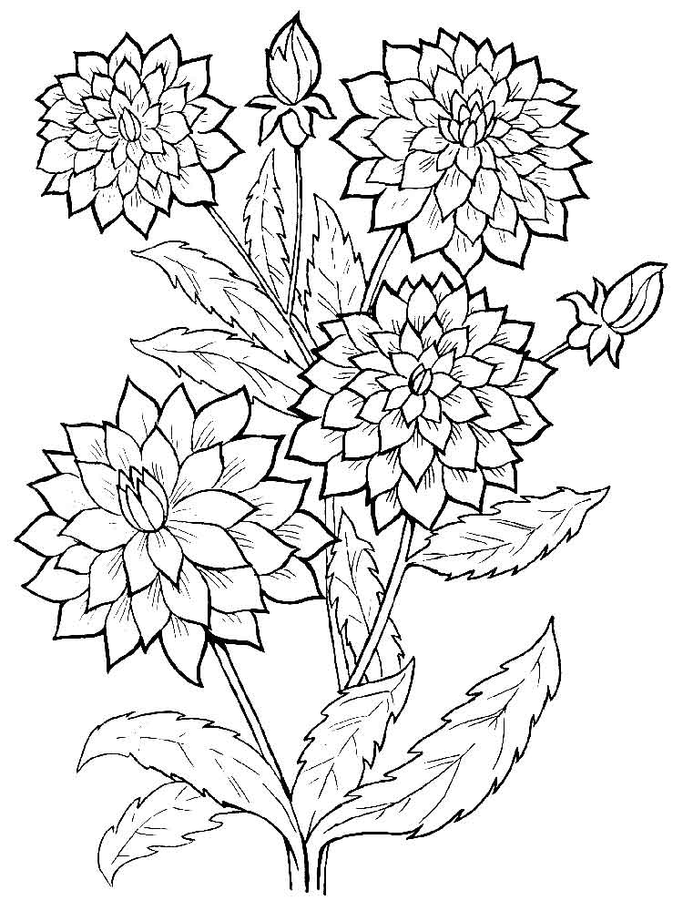 Dahlia coloring #9, Download drawings