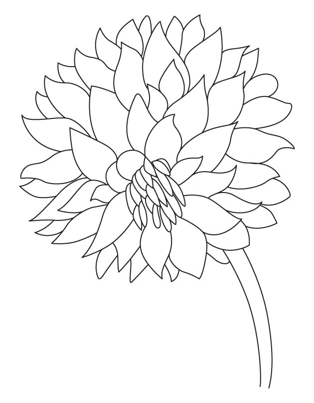 Dahlia coloring #14, Download drawings