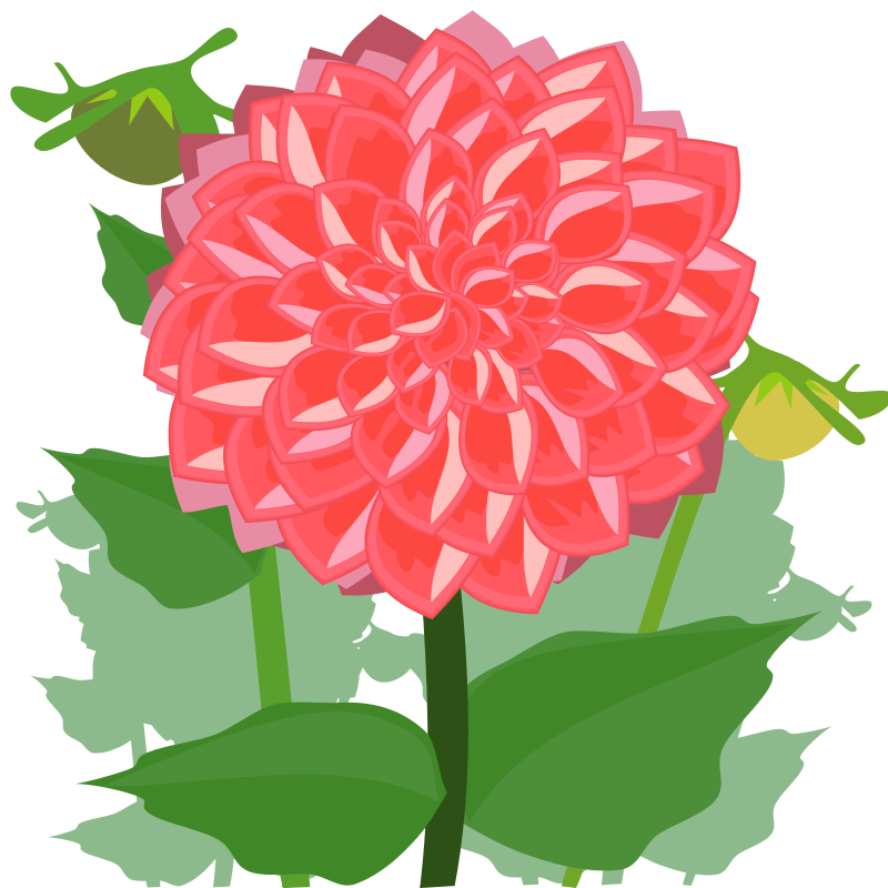 Dahlia svg #6, Download drawings