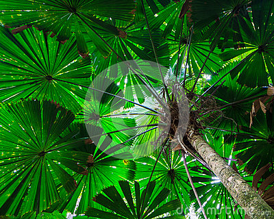 Daintree Rainforest clipart #16, Download drawings