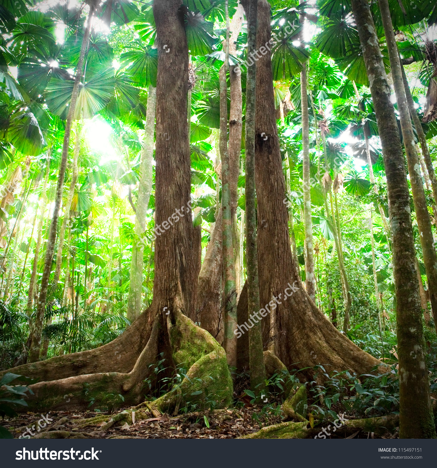 Daintree Rainforest clipart #1, Download drawings