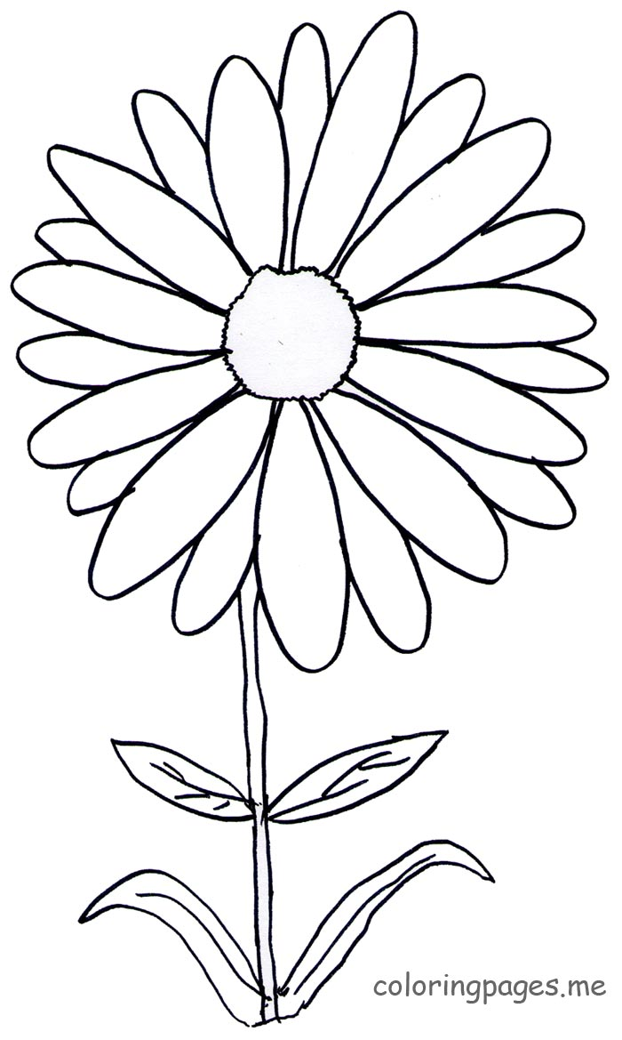 Daisy coloring #9, Download drawings