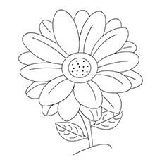 Gerbera coloring #1, Download drawings