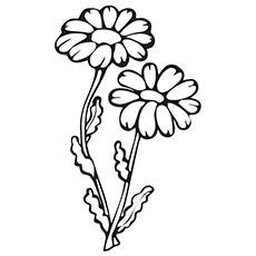 Coneflower coloring #20, Download drawings