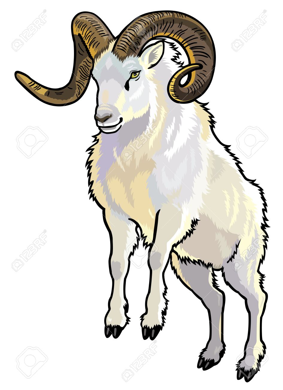 Dall Sheep clipart #18, Download drawings