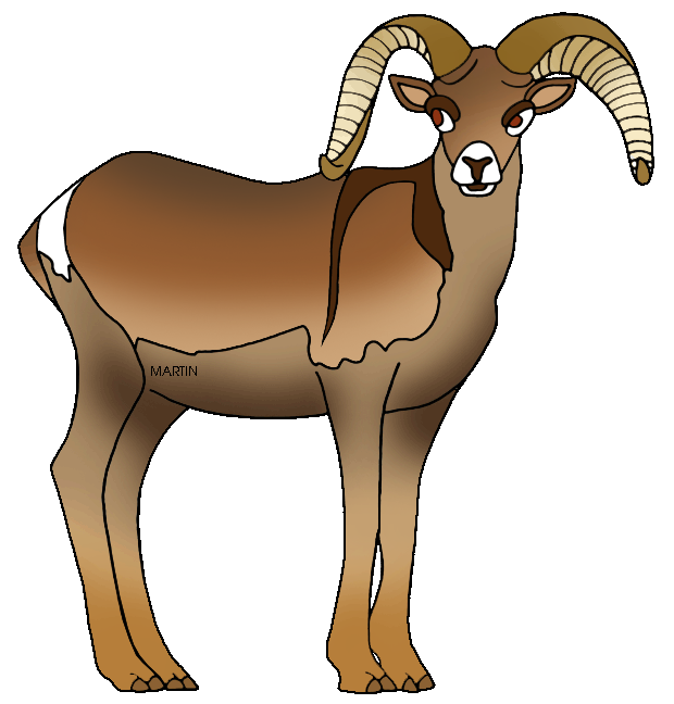 Dall Sheep clipart #8, Download drawings