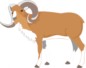 Dall Sheep clipart #4, Download drawings
