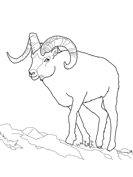 Dall Sheep clipart #1, Download drawings