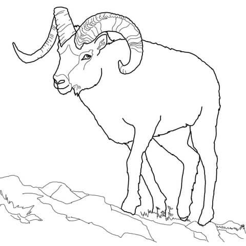 Dall Sheep coloring #8, Download drawings