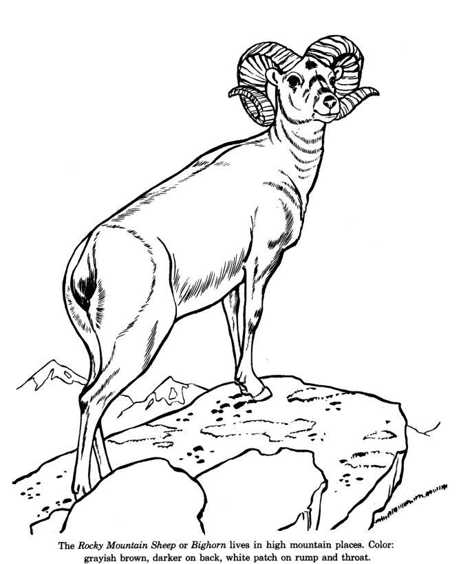 Dall Sheep coloring #5, Download drawings