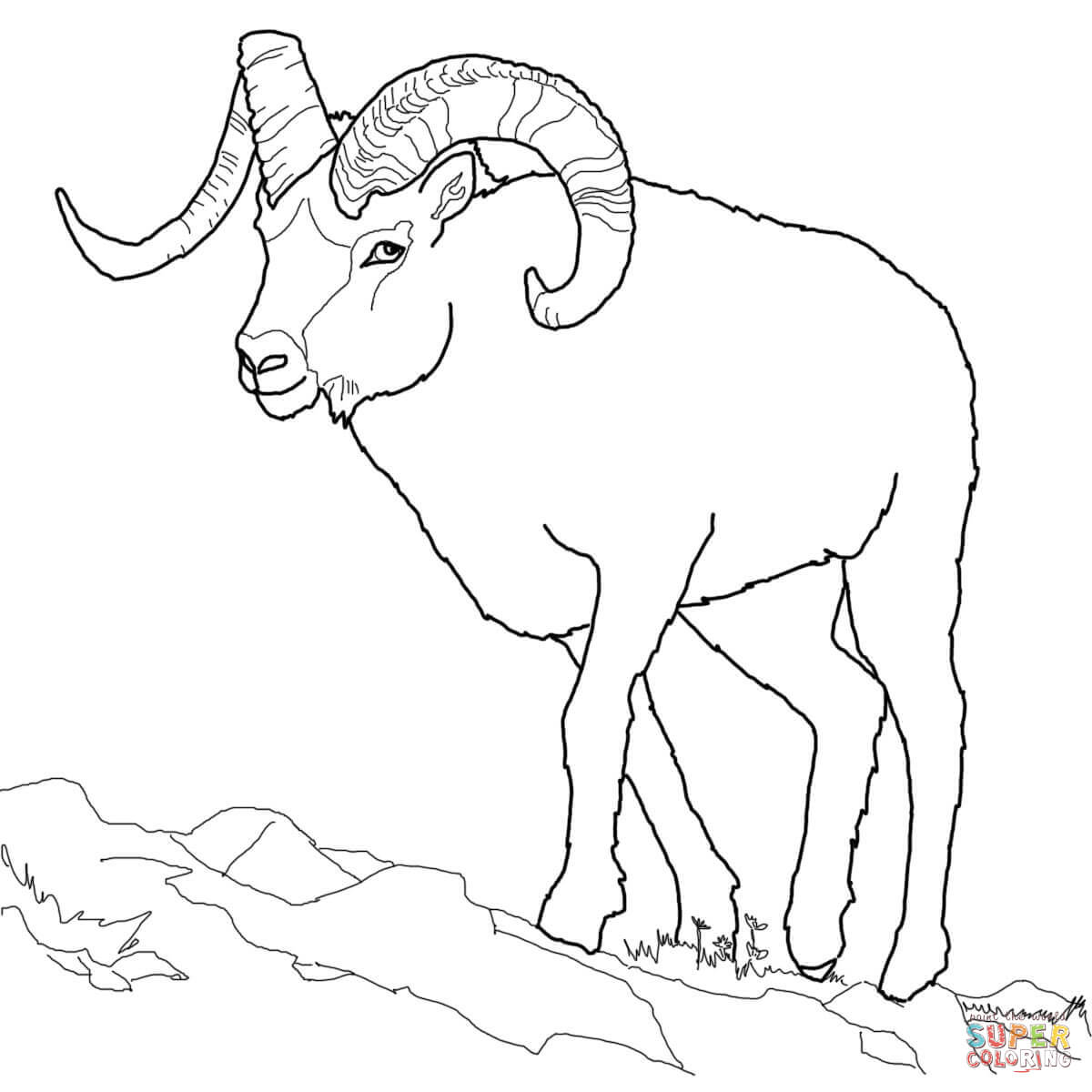Dall Sheep coloring #10, Download drawings