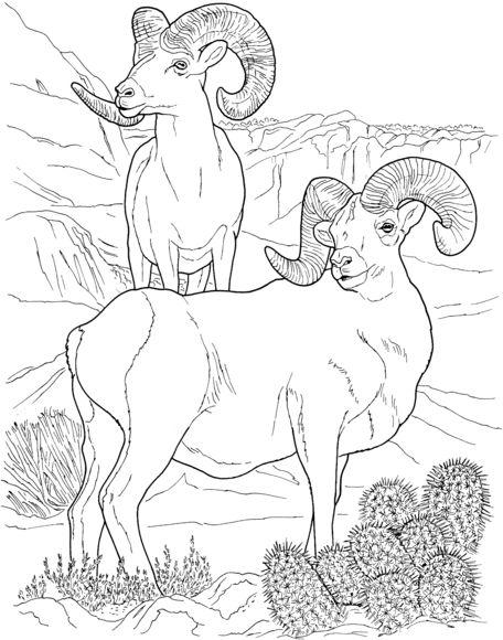 Dall Sheep coloring #16, Download drawings