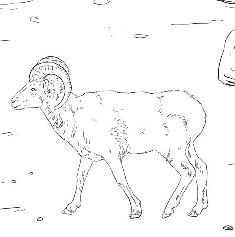 Dall Sheep coloring #9, Download drawings