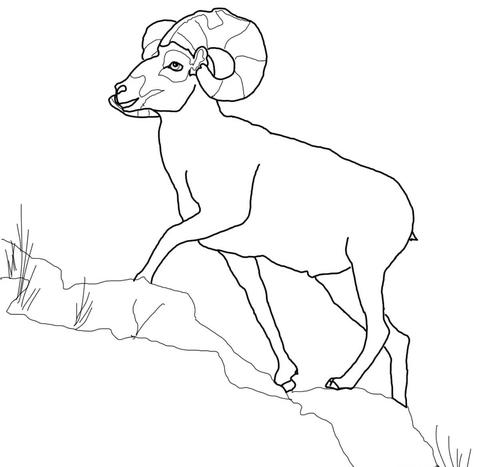 Dall Sheep coloring #7, Download drawings