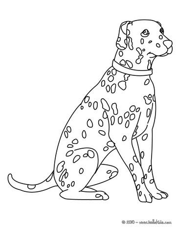Dalmatian coloring #14, Download drawings