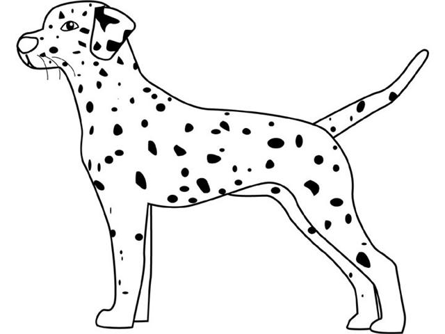 Dalmation coloring #9, Download drawings