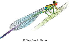 Damselfly clipart #20, Download drawings