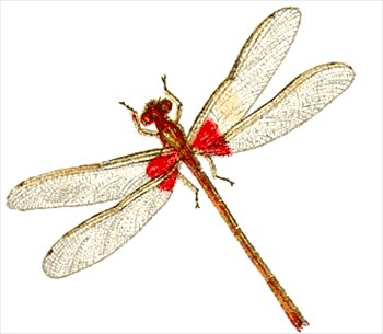 Damselfly clipart #1, Download drawings