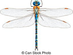 Damselfly clipart #15, Download drawings