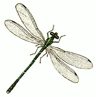 Damselfly clipart #19, Download drawings