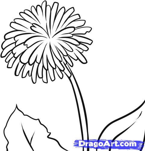 Dandelion coloring #6, Download drawings