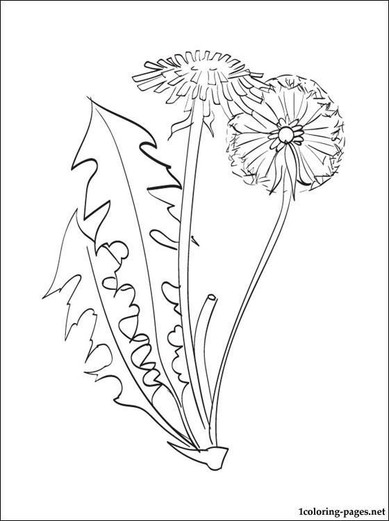 Dandelion coloring #12, Download drawings