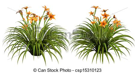 Daylily clipart #17, Download drawings