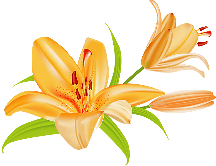 Daylily clipart #10, Download drawings