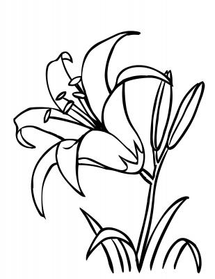 Daylily clipart #4, Download drawings