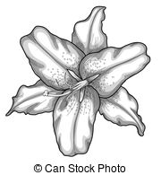 Daylily clipart #7, Download drawings