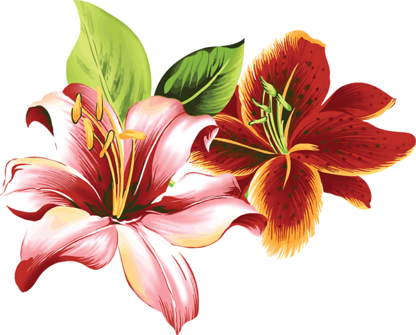 Daylily clipart #9, Download drawings