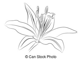 Daylily clipart #20, Download drawings