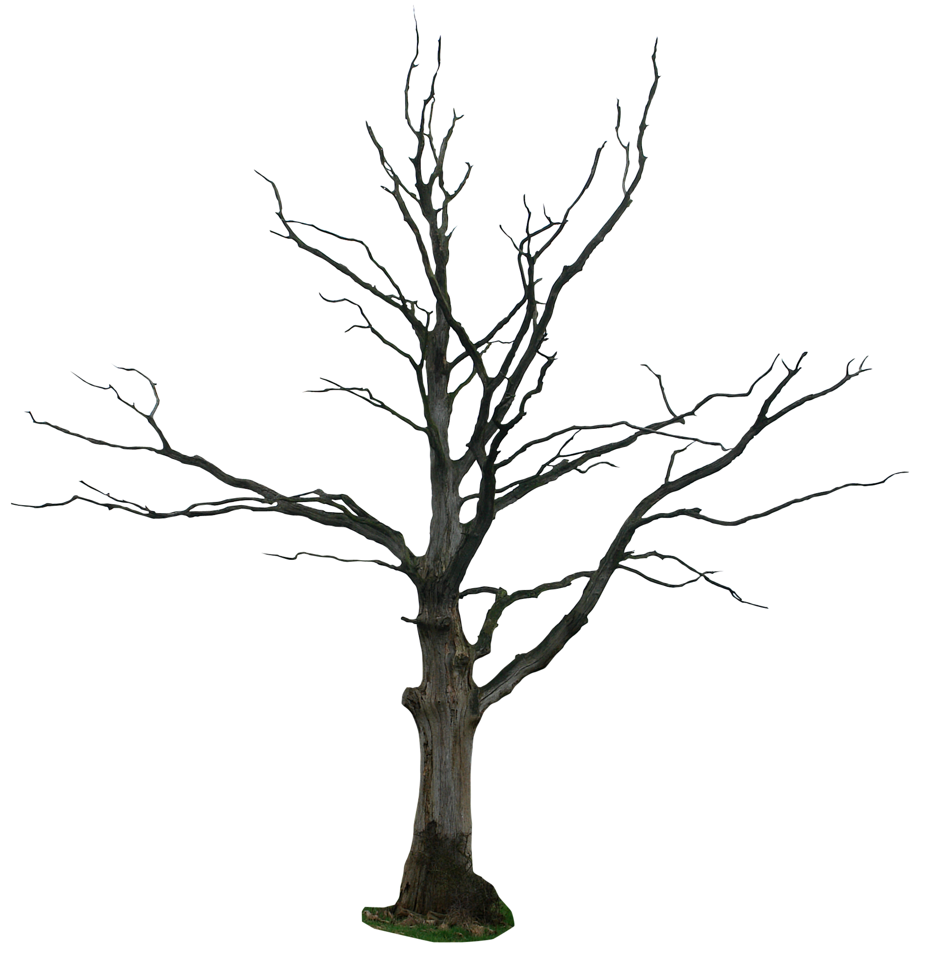 Dead Tree Dark Abstract clipart #6, Download drawings