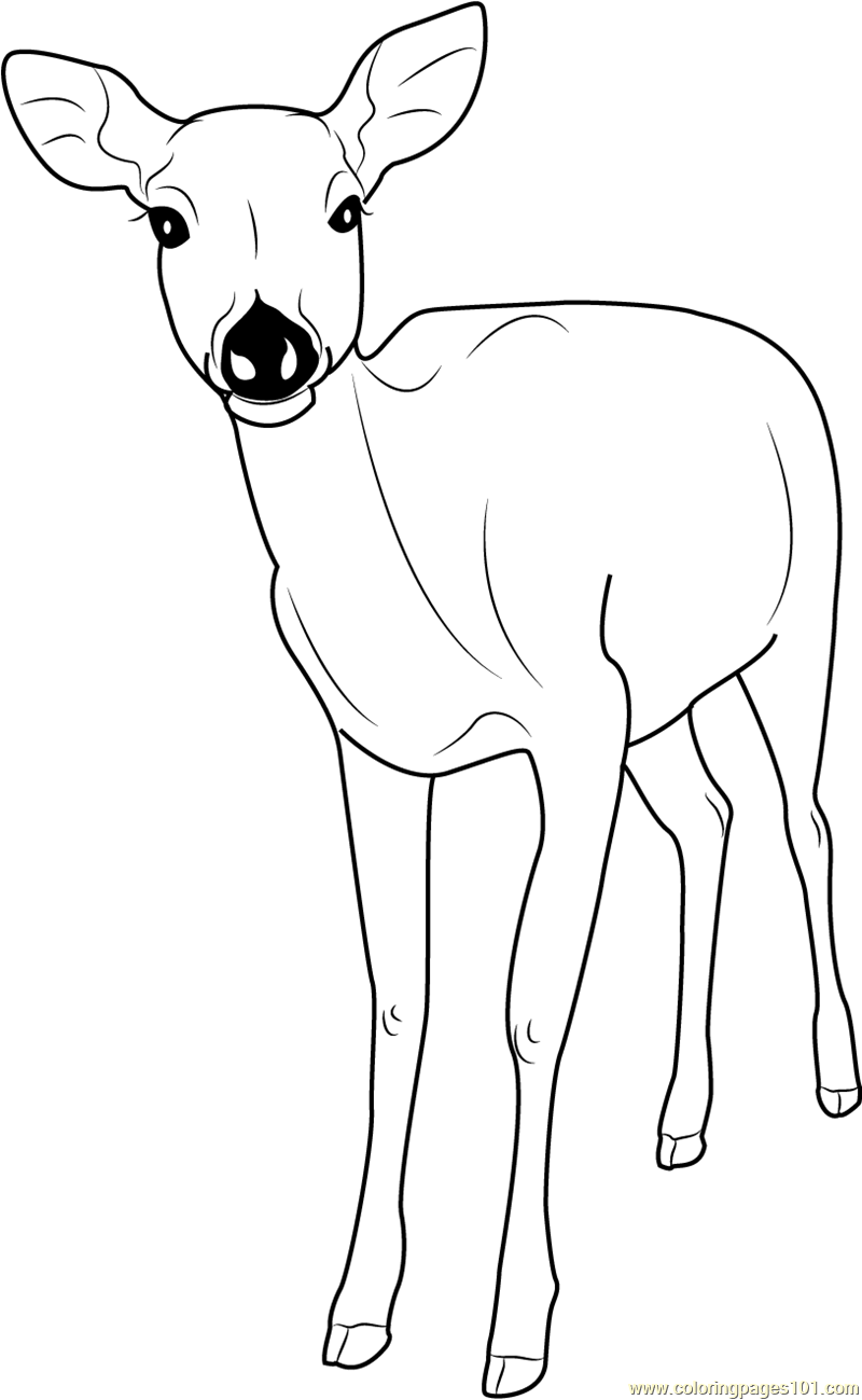 Deer coloring #11, Download drawings