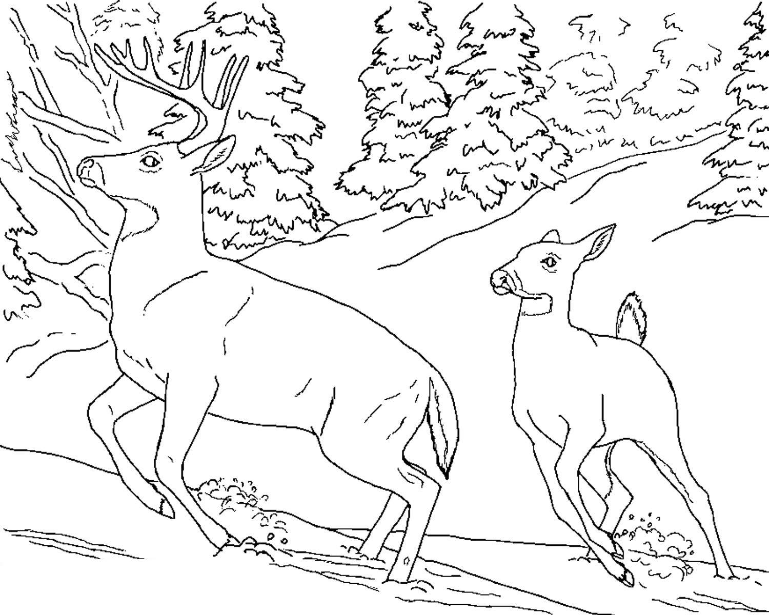 Deer coloring #9, Download drawings