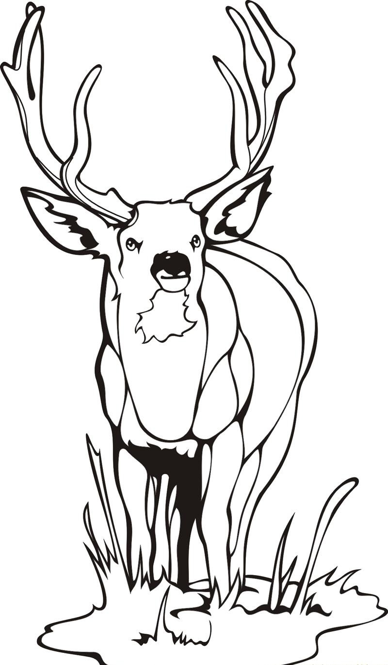 Deer coloring #10, Download drawings