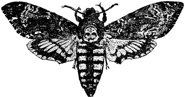 Deaths Head Moth clipart #6, Download drawings
