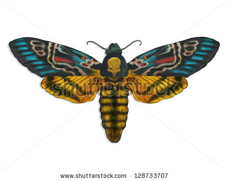 Deaths Head Moth clipart #14, Download drawings
