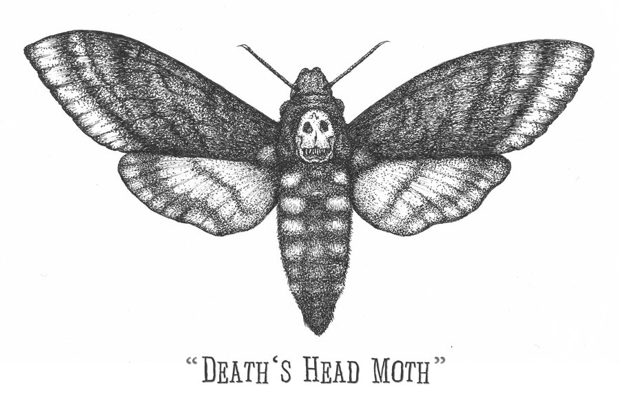 Deaths Head Moth clipart #15, Download drawings