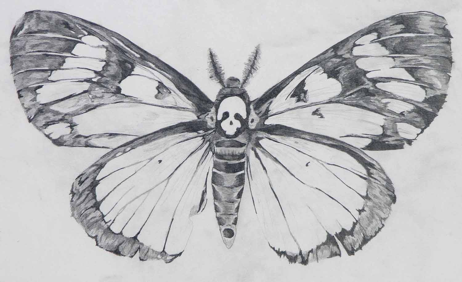 Deaths Head Moth clipart #1, Download drawings