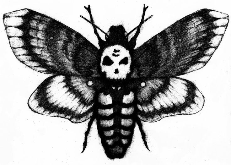 Deaths Head Moth clipart #17, Download drawings