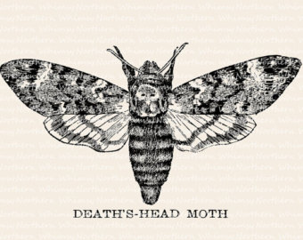 Deaths Head Moth clipart #19, Download drawings