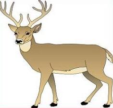 Deer clipart #13, Download drawings