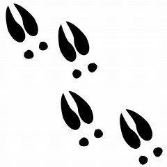 deer tracks svg #1222, Download drawings